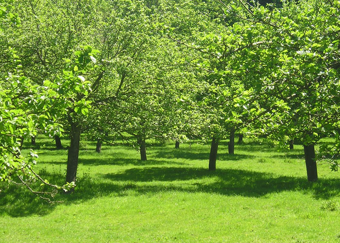 Back orchard