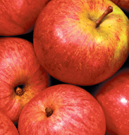 Somerset Cider Vinegar apples