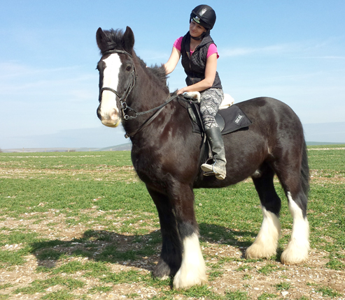 Oscar the Shire horse